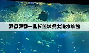 割引 大洗 水族館 アクア ワールド